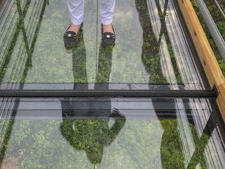 The SkyBridge glass bottom floor (Photo courtesy of Gatlinburg SkyLift Park)