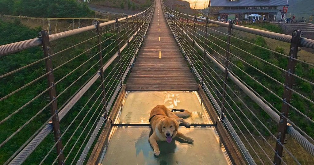 This brave pup belongs to SkyLift Park's Marketing Director Marcus Watson (photo courtesy of Gatlinburg's SkyLift Park)