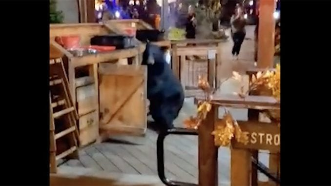 A video posted to Facebook by Tyler Crawford shows a bear attempting to rummage through a trash can at Anakeesta's Smokehouse restaurant on Tuesday night (photo by Tyler Crawford)