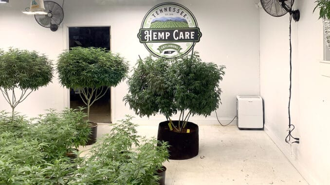 For curious onlookers, Tennessee Hemp Care's window display can be viewed on the main strip of Downtown Gatlinburg (photo by Morgan Overholt, TheSmokies.com)
