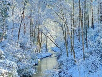 Snow in the Great Smoky Mountains